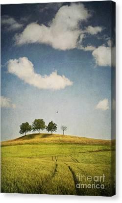We Are 4 Canvas Print by Priska Wettstein