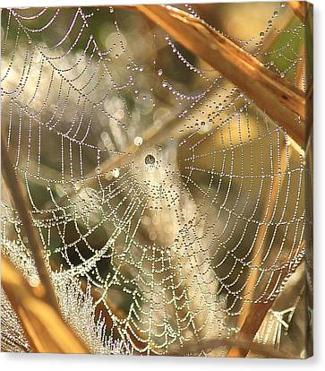 Canvas Print featuring the photograph Web Of Jewels by Penny Meyers