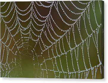 Canvas Print featuring the photograph Web With Dew by Daniel Reed
