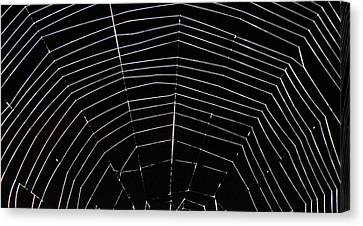 Canvas Print featuring the photograph Web Wonder 2 by Elizabeth Sullivan