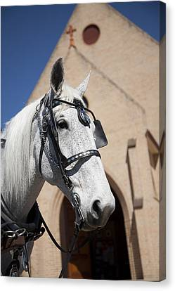 Canvas Print featuring the photograph Wedding Horse  by Carole Hinding