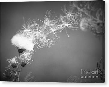 Canvas Print featuring the photograph Weed In The Wind by Deniece Platt