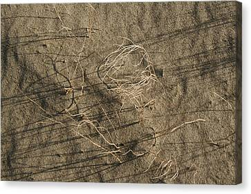 Weeds In Sand Canvas Print