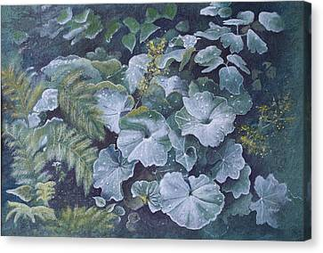 Weeping Ladies Mantle Canvas Print by Patsy Sharpe