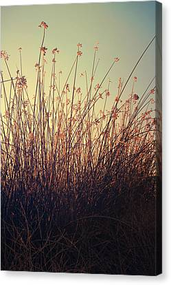 Cattail Canvas Print - Weightless by Laurie Search