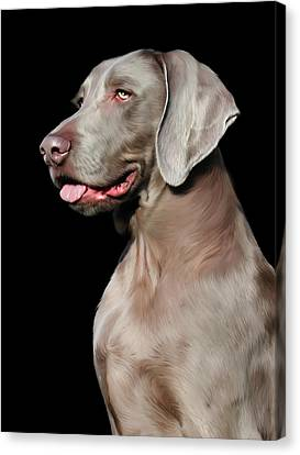 Weimaraner  Canvas Print by Julie L Hoddinott