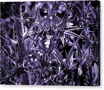 Welcome To The Purple Jungle Canvas Print by Beth Akerman