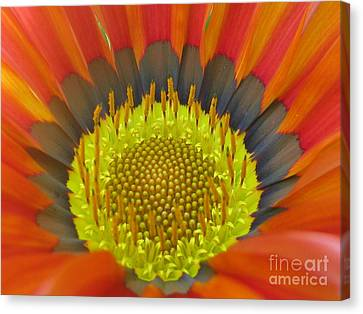 Well-disposed Canvas Print by Tina Marie