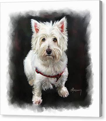 West Highland White Terrier Canvas Print by Michael Greenaway