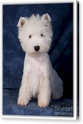 West Highland White Terrier Pup Canvas Print by Maxine Bochnia