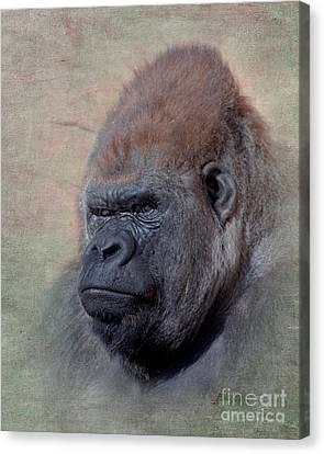 Western Lowland Gorilla Canvas Print by Betty LaRue
