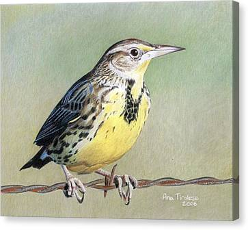 Canvas Print featuring the drawing Western Meadowlark by Ana Tirolese