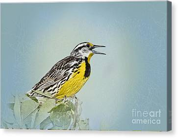 Meadowlark Canvas Print - Western Meadowlark by Betty LaRue