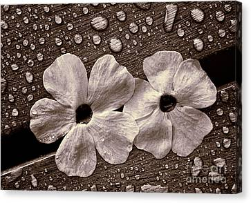 Wet Flowers And Wet Table Canvas Print by Ari Salmela