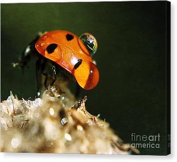 Wet Lady Bug Canvas Print