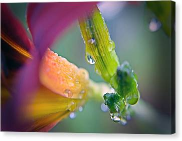 Canvas Print featuring the photograph Wet Lily by Susan Leggett