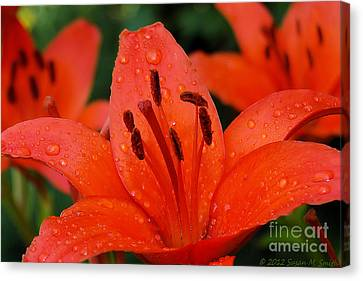 Susan Smith Canvas Print - Wet On Red by Susan Smith