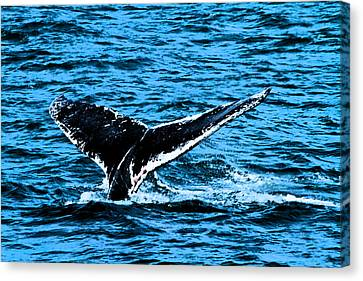 Whale Dip Canvas Print by Karol Livote
