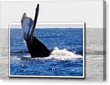 Whale Tail Canvas Print by Jean Noren