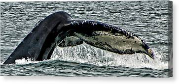 Whale Tail Canvas Print by Jon Berghoff