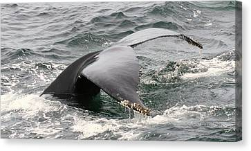 Whale Tale Canvas Print by Tammy Bullard