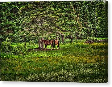What A Life Canvas Print by Gary Smith