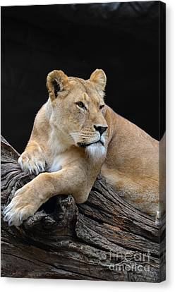 What Is Over There Canvas Print by Eva Kaufman