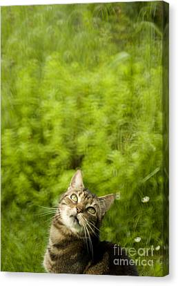 What Is Up There Canvas Print by Angel  Tarantella