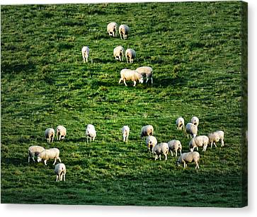 What The Flock Canvas Print by Bill Cannon