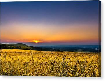 Wheat Field Canvas Print by Rob Webb