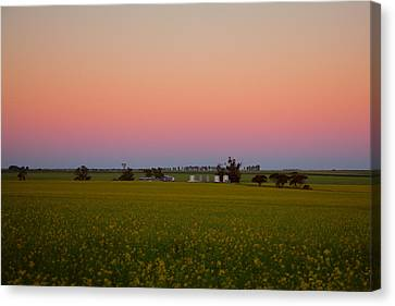 Wheatbelt Country Canvas Print by Serene Maisey