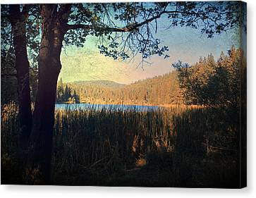 White Pines Canvas Print - When I'm In Your Arms by Laurie Search