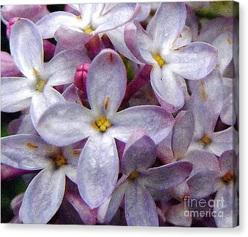 When Lilacs Last In The Dooryard Bloom'd Canvas Print by Janeen Wassink Searles