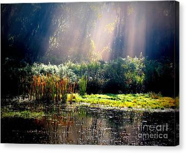 When Morning Hits The Marsh Canvas Print by Carol Groenen