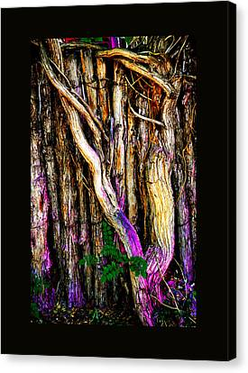 Canvas Print featuring the photograph When Sound Is Color by Susanne Still