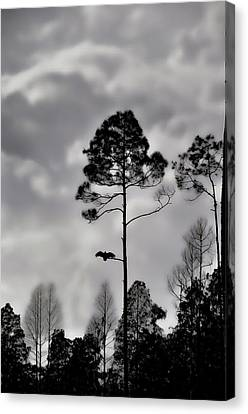 When The Air Gets Too Thin Canvas Print by Jan Amiss Photography