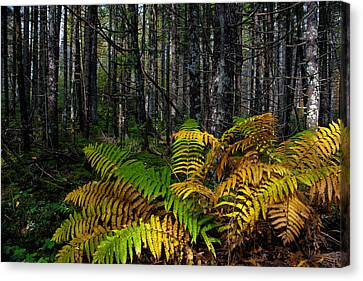 Where The Ferns Grow Canvas Print by Ronald Lutz