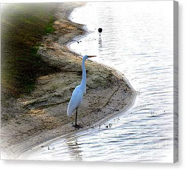 Where The Herons Meet Canvas Print by Susanne Van Hulst