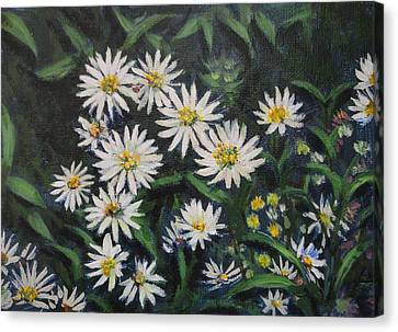 Whie Asters Canvas Print by Usha Shantharam