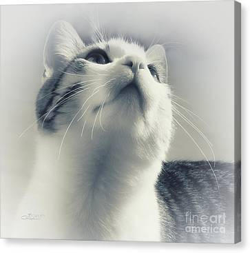 Whiskers Canvas Print by Jutta Maria Pusl