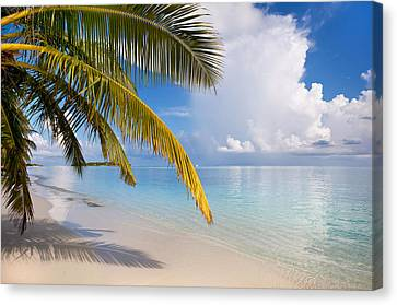 Whispering Palm On The Tropical Beach Canvas Print by Jenny Rainbow