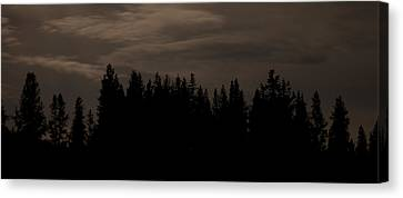 Whispering Pines Canvas Print by Arlyn Petrie