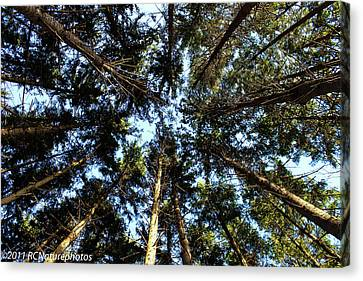 Canvas Print featuring the photograph Whispering Pines by Rachel Cohen