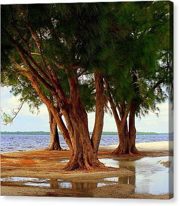 Whispering Trees Of Sanibel Canvas Print