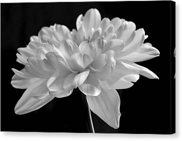 Whispering White. Canvas Print