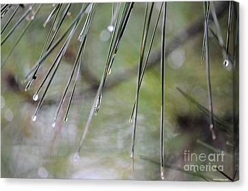 Whispers Of An Autumn Rain Canvas Print