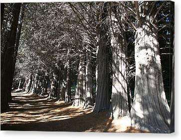 White Alley Canvas Print