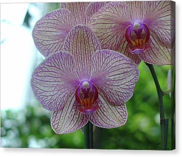 Canvas Print featuring the photograph White And Pink Orchid by Charles and Melisa Morrison
