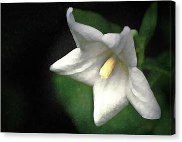 White Balloon Flower-faux Painting Canvas Print by  Onyonet  Photo Studios
