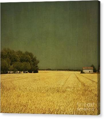 White Barn Canvas Print by Paul Grand